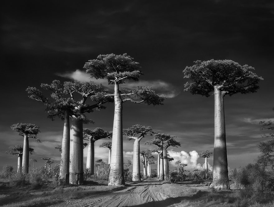 Ancient-Trees-6
