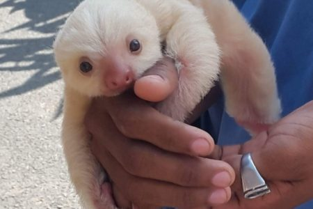 1. Sloth