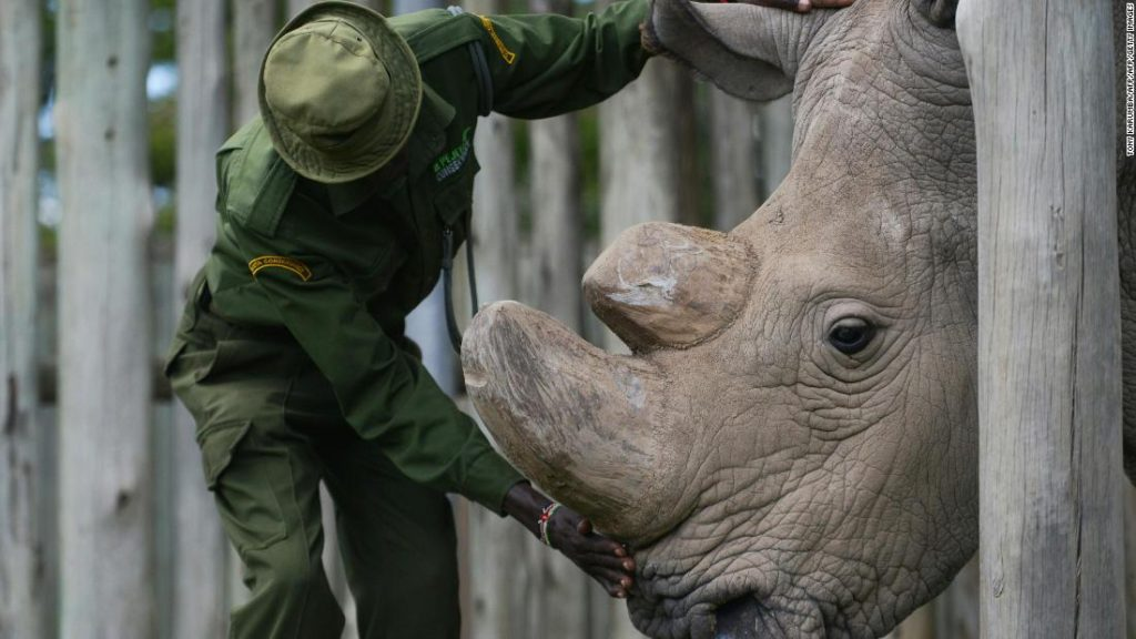The Last of a Kind The Death of Africa's Last Male White Rhino