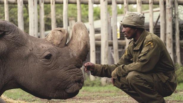 white-rhino-death
