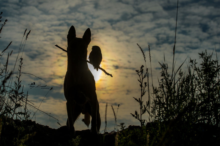 21. Ingo the dog holds a branch for his faithful companion, Poldi, as they ride off into the sunset