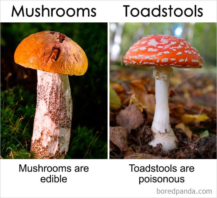 20. Mushrooms vs Toadstools