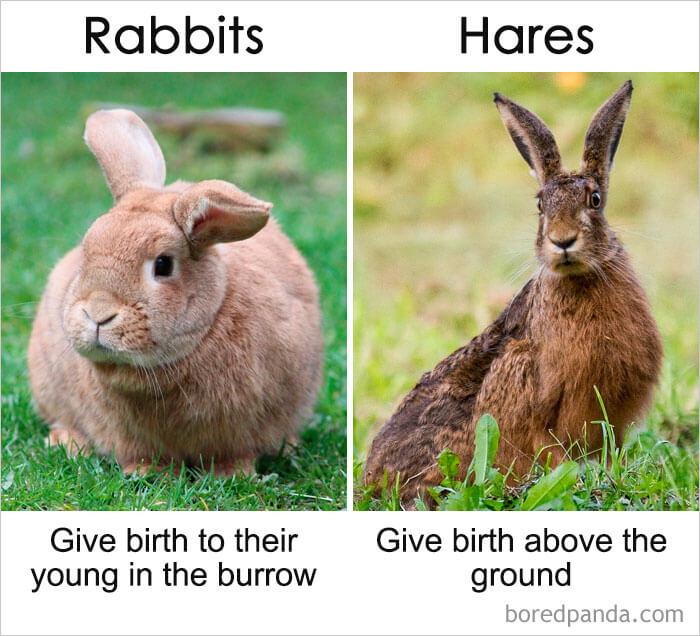 7. Rabbits vs Hares