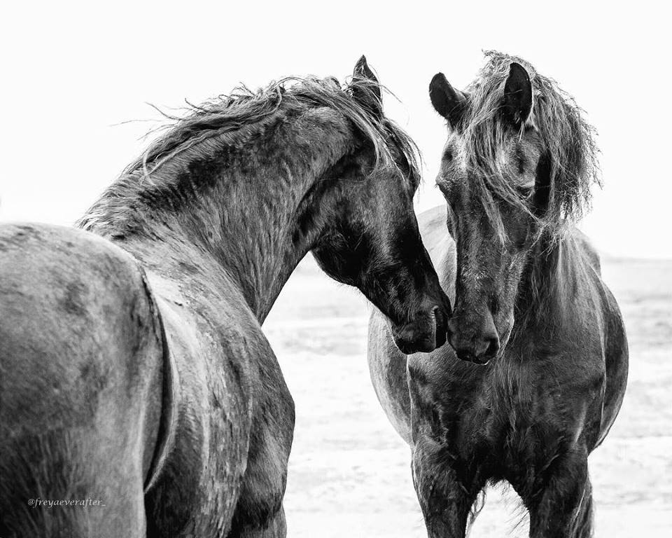 Photographer Captures The 'Glimpse of Love' In Animals And It's Too Adorable-13