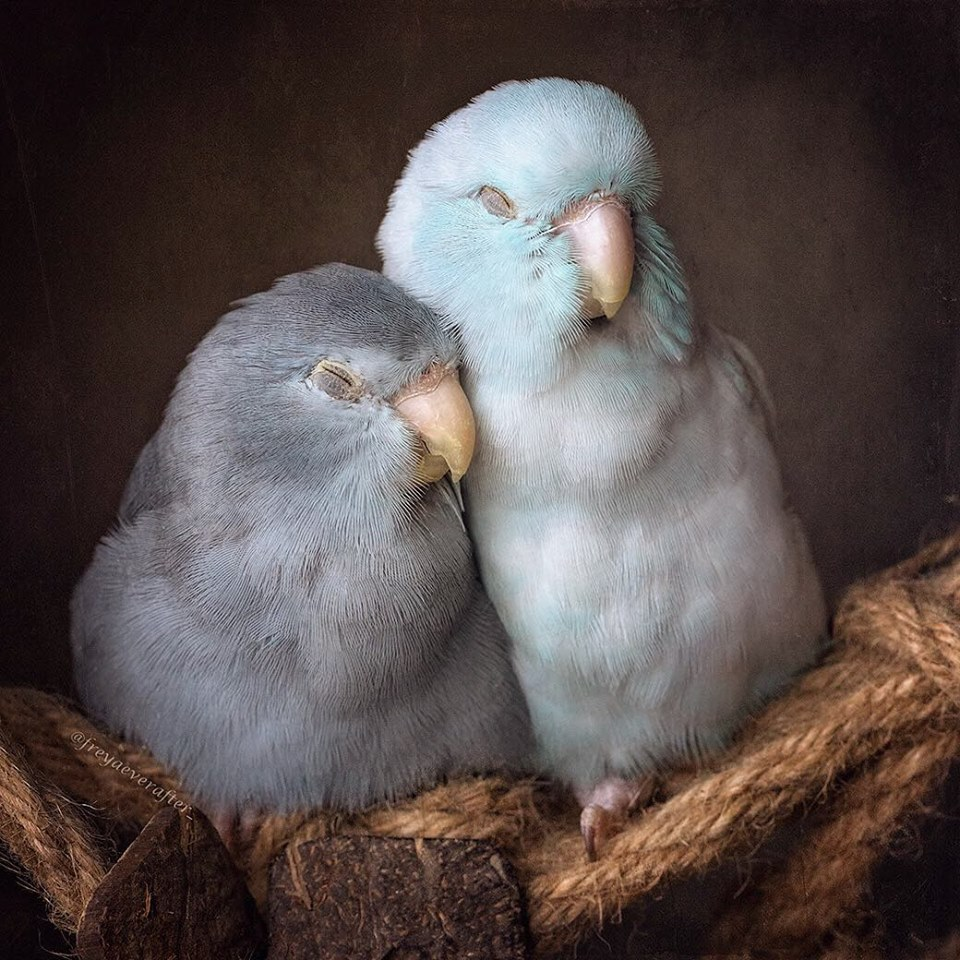 Photographer Captures The 'Glimpse of Love' In Animals And It's Too Adorable-15