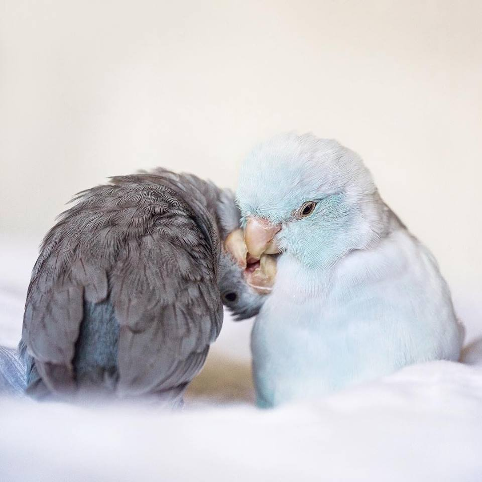 Photographer Captures The 'Glimpse of Love' In Animals And It's Too Adorable-27