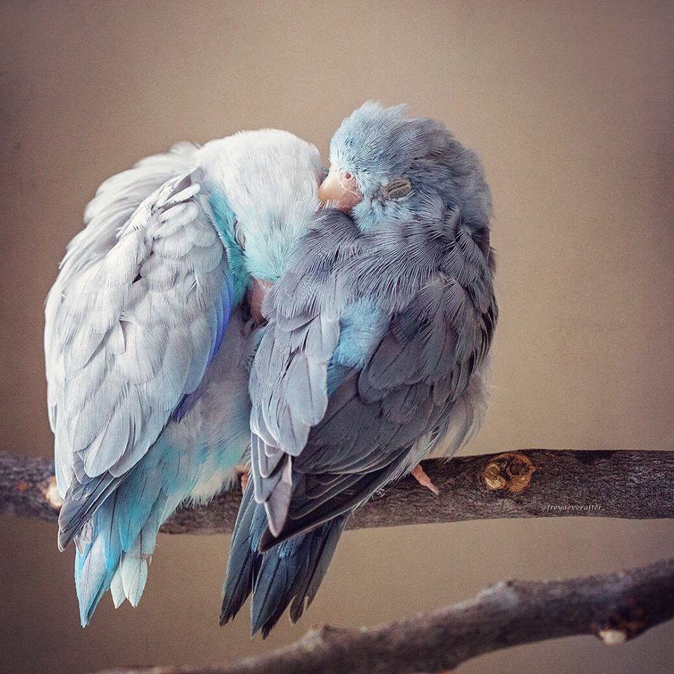 Photographer Captures The 'Glimpse of Love' In Animals And It's Too Adorable-6