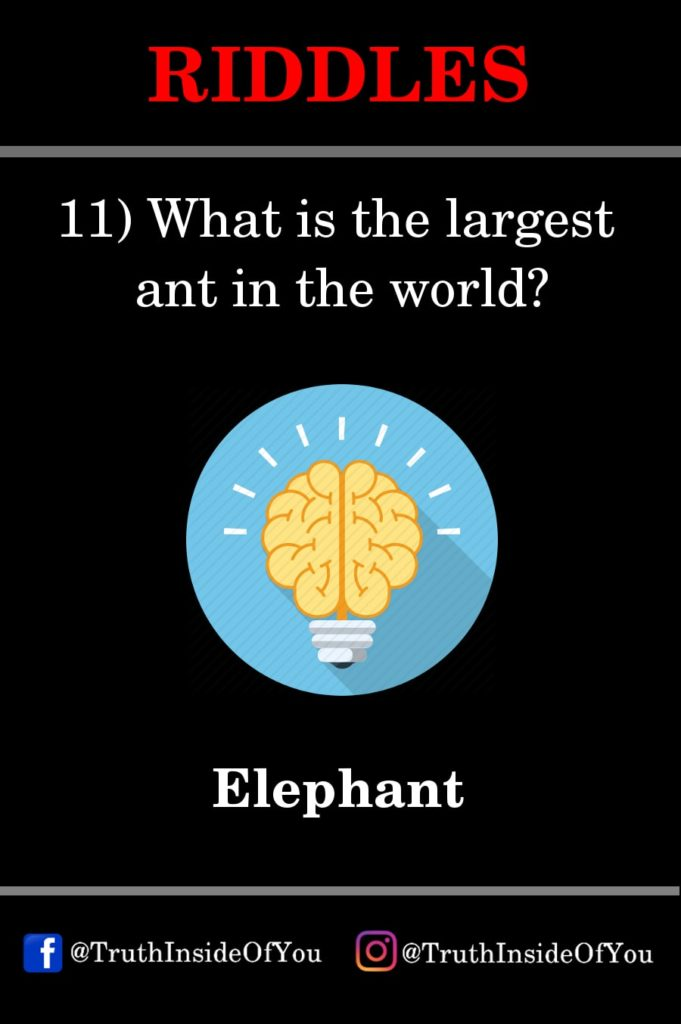 11. What is the largest ant in the world