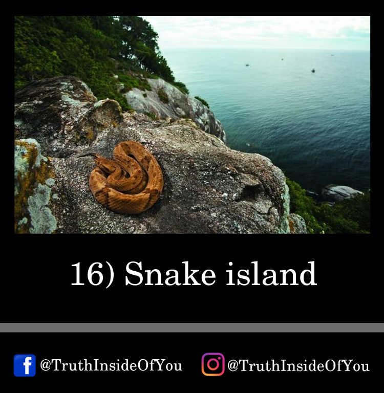 16. Snake island