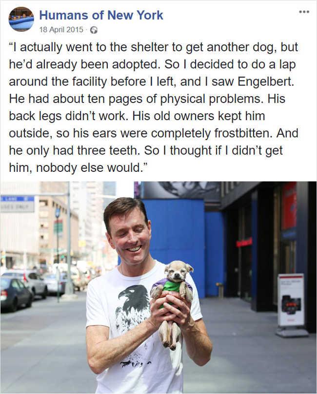 1. Kind owner
