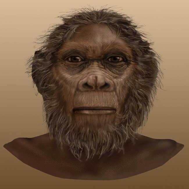 3. Homo Rudolfensis