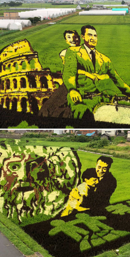 6. Rice Paddy Art