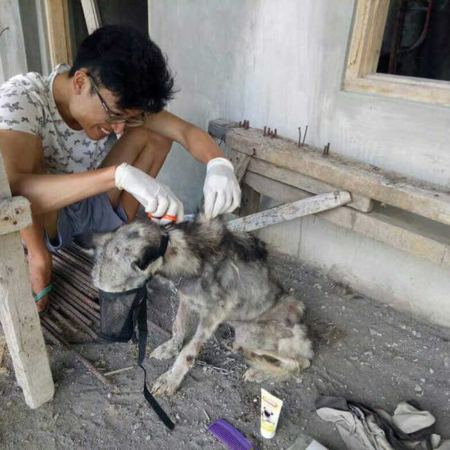 A Malnourished Husky Saved By a Kind Soul Who Brings Her Home - 3