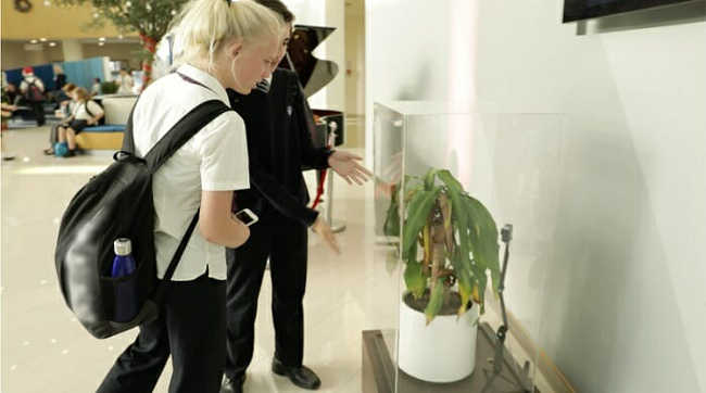 Bullying a Plant Brings Out Astonishing Results That Will Make You Think - 9