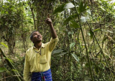 Jadav Payeng - This Man Planted A Tree Every Day For Four Decades