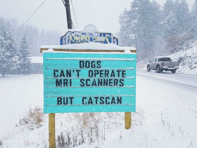 Funniest Signs Are Covering the Streets of Colorado - 4