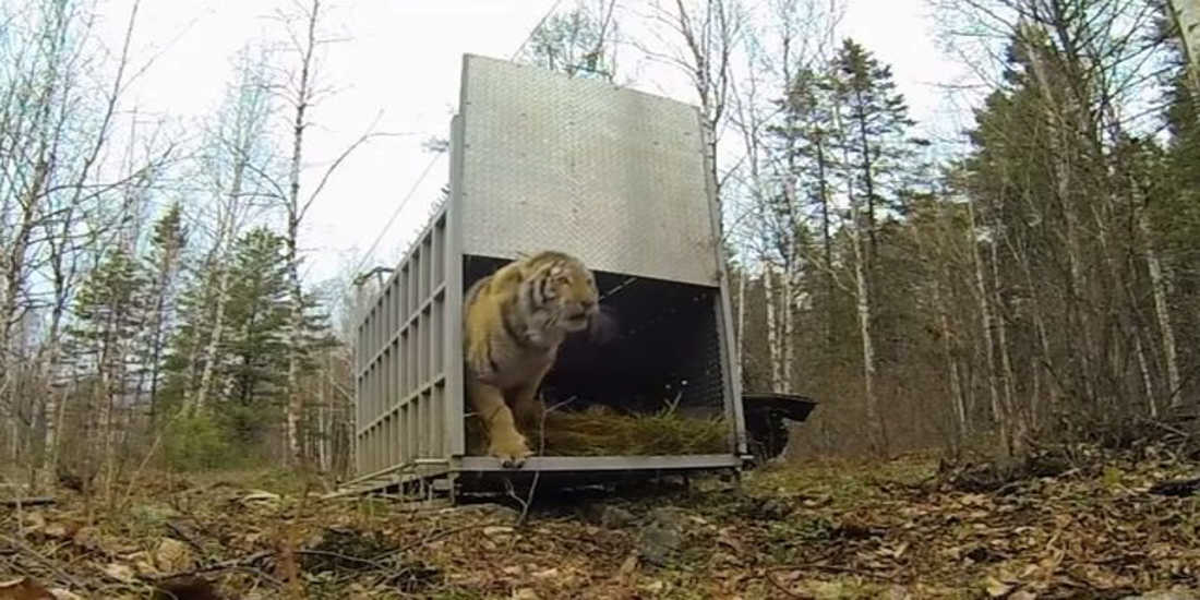 Setting Animals Free For The First Time Ever – An Incredible Sight
