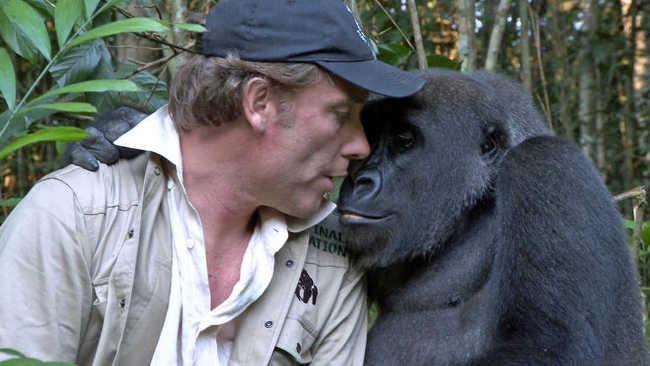 The Reunion of Damian Aspinall And Kwibi The Gorilla-2