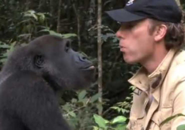 The Reunion of Damian Aspinall And Kwibi The Gorilla