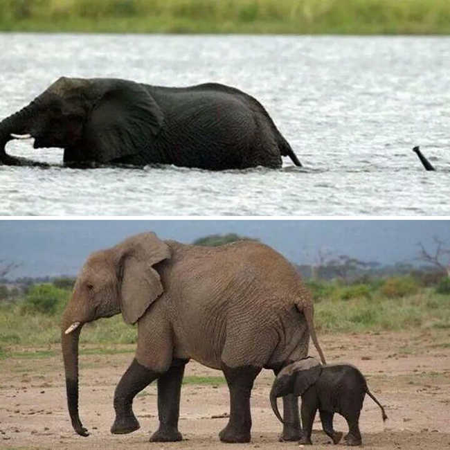 These 10 Adorable Photos Of Baby Elephants Are Treat For The Eyes - 1