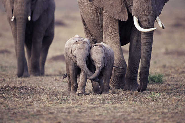 These 10 Adorable Photos Of Baby Elephants Are Treat For The Eyes - 2