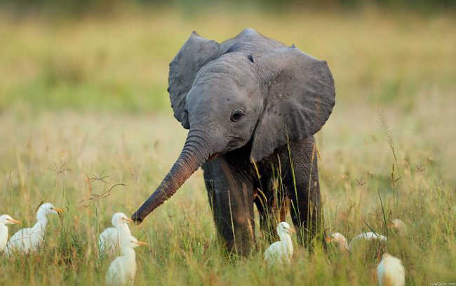 These 10 Adorable Photos Of Baby Elephants Are Treat For The Eyes - 3