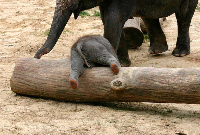 These 10 Adorable Photos Of Baby Elephants Are Treat For The Eyes - 4