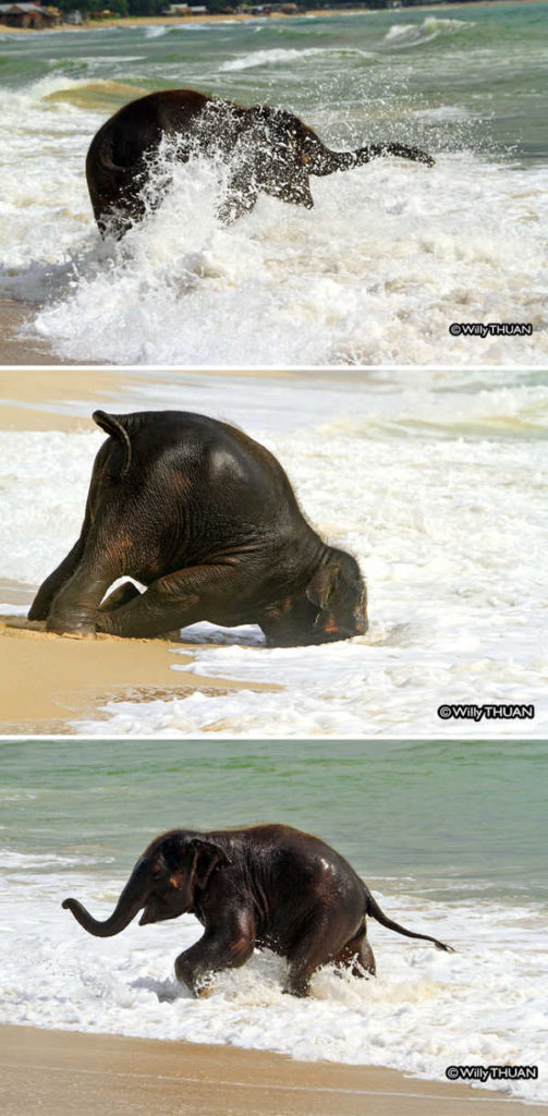 These 10 Adorable Photos Of Baby Elephants Are Treat For The Eyes - 5