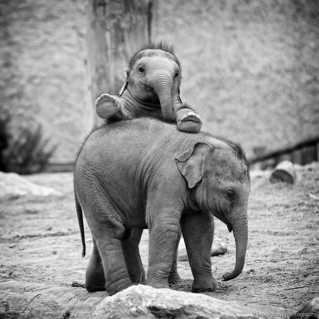 These 10 Adorable Photos Of Baby Elephants Are Treat For The Eyes - 9