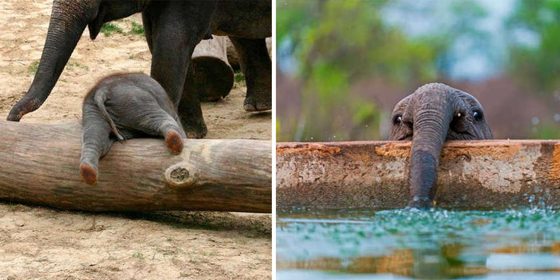 These 10 Adorable Photos Of Baby Elephants Are Treat For The Eyes