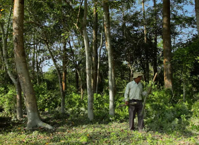 This Man Planted A Tree Every Day For Four Decades And Changed This Island-12