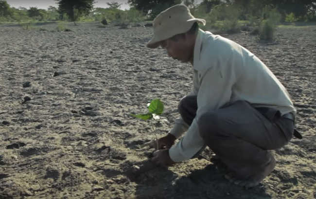 This Man Planted A Tree Every Day For Four Decades And Changed This Island-6