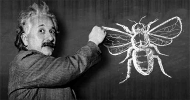 10. According to Albert Einstein, if honey bees were to disappear from the earth