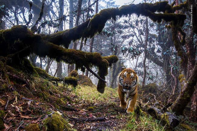 12. Tigerland