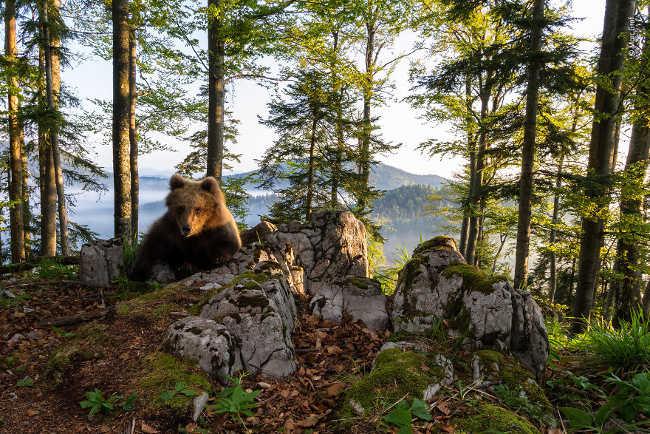 16. Bear Territory