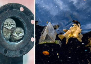 20+ Truly Amazing Wildlife Photos of 2018
