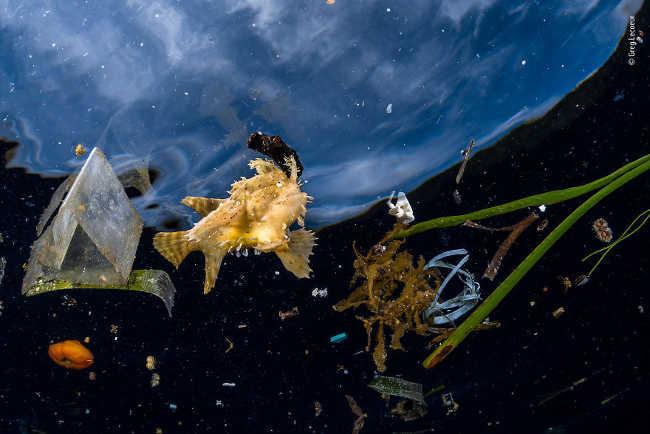 24. Life among litter