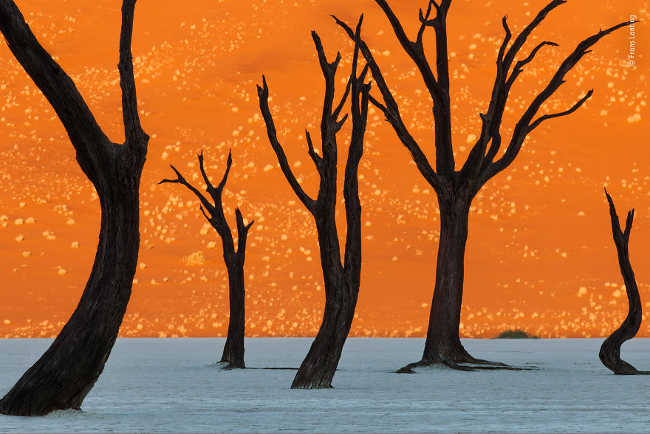 9. Ghost trees