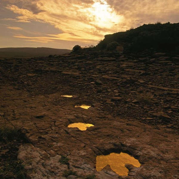 4. Footprints of dinosaurs