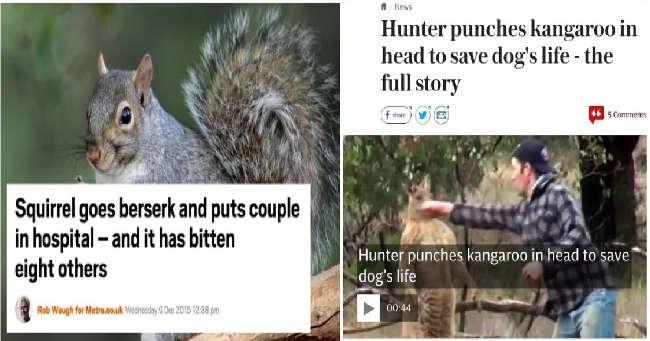 5. When animals strike