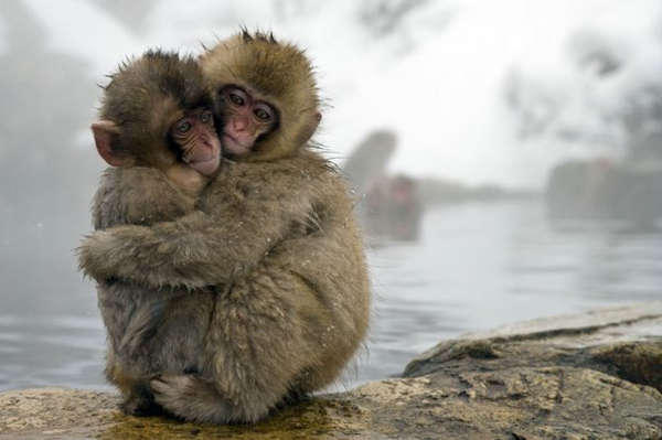 Animals As Sentient Beings - 3