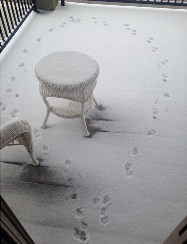 1. Footmarks on the snow