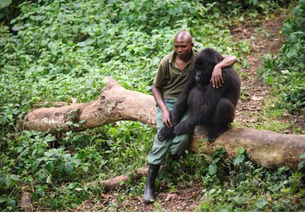 1. The sad gorilla