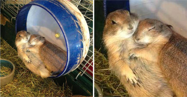23 Heart-Warming Photos of Animals In Love That Will Make Your Day - 1
