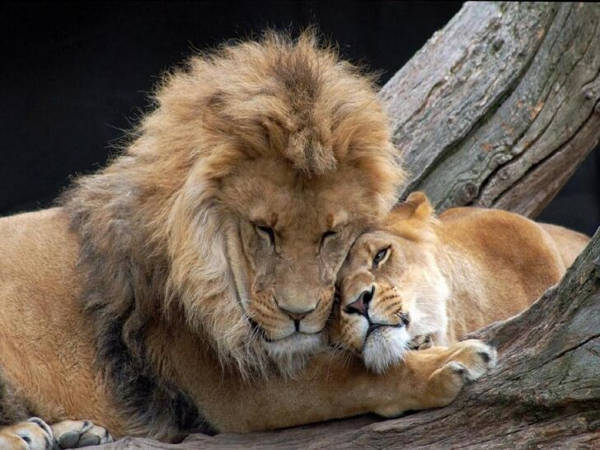 23 Heart-Warming Photos of Animals In Love That Will Make Your Day - 21