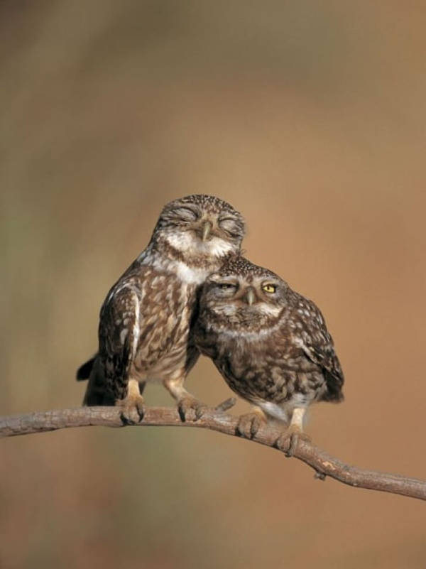 23 Heart-Warming Photos of Animals In Love That Will Make Your Day - 22