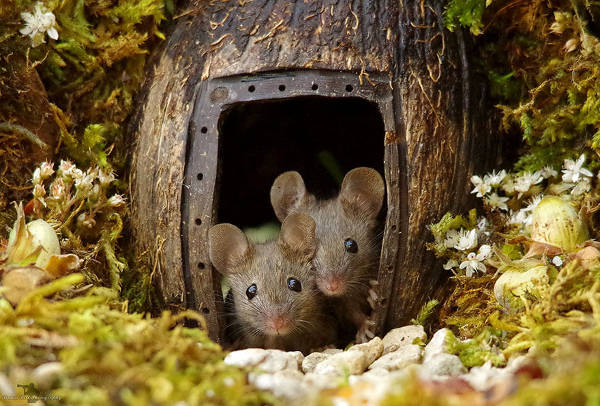 Photographer Discovers A Mice Family In His Garden And Built An Amazing Miniature Village For Them - 1