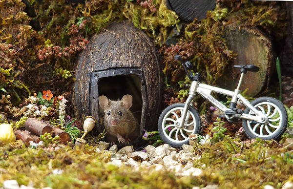 Photographer Discovers A Mice Family In His Garden And Built An Amazing Miniature Village For Them - 10