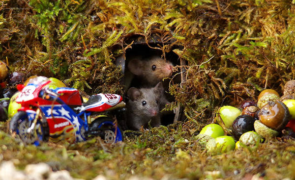 Photographer Discovers A Mice Family In His Garden And Built An Amazing Miniature Village For Them - 12