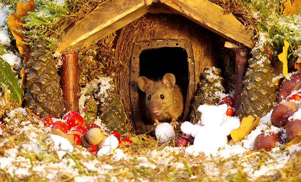 Photographer Discovers A Mice Family In His Garden And Built An Amazing Miniature Village For Them - 14